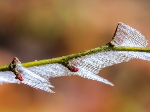 frosty-branches-2033684_960_720