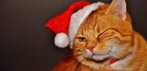 cat-1898514_960_720