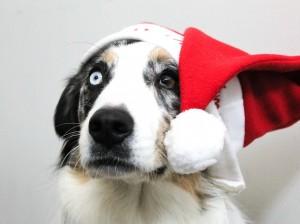 christmas-1874257_960_720
