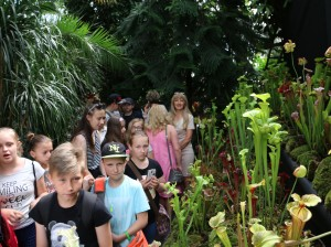 Festiwal roślin palmiarnia