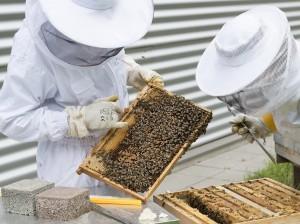 beekeeper-2650663_960_720