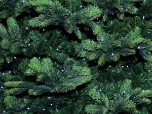 christmas-tree-3860669_960_720