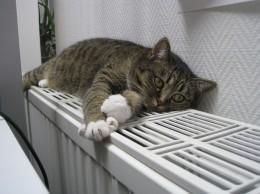 cat-1154649_960_720